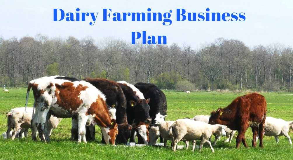Dairy Farm Business Plan In India