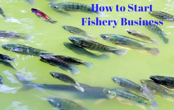 how to start fishery business, how to start fish farming in india