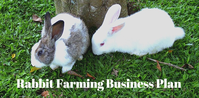 Rabbit Farming Business Plan